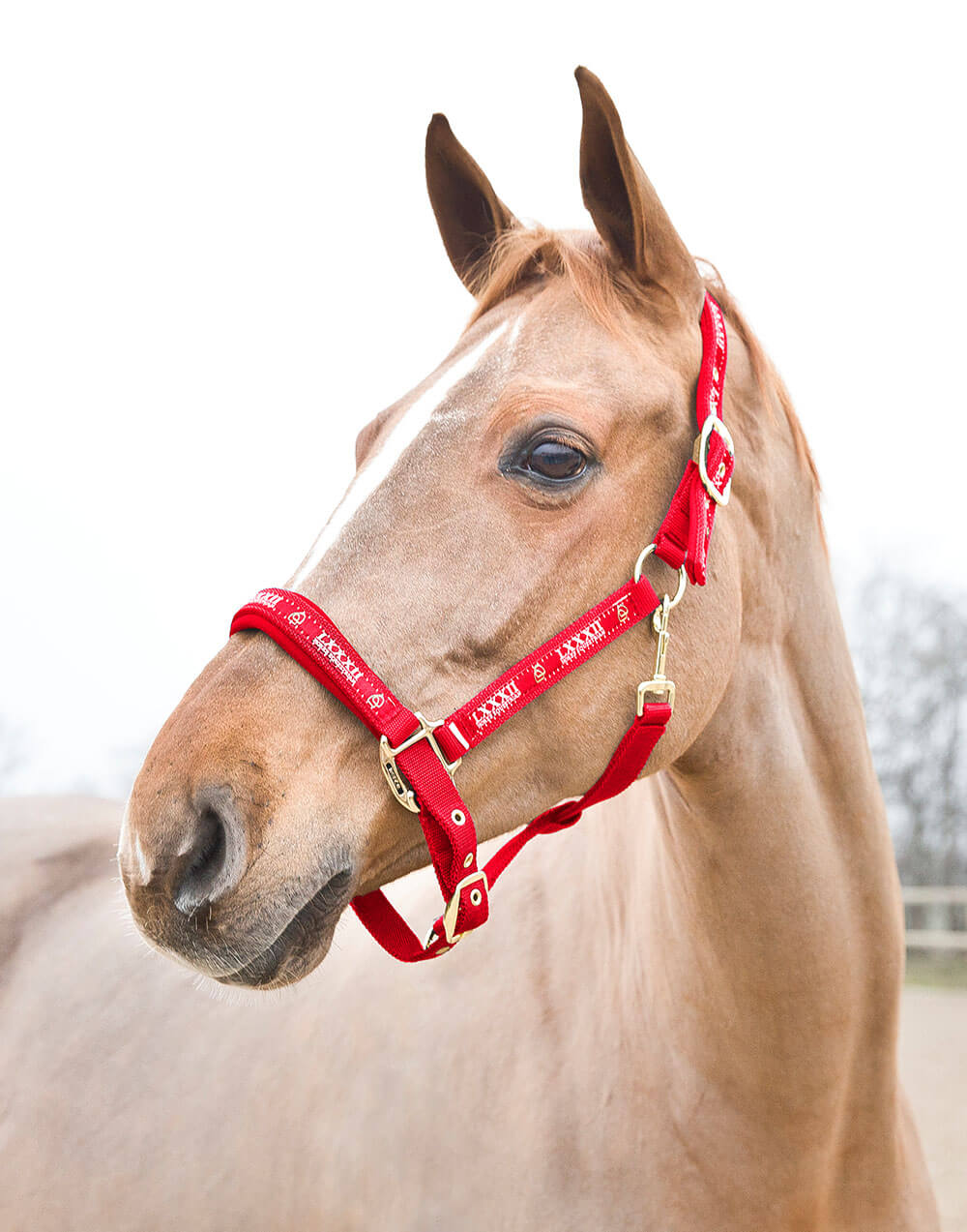 Strong adjustable and comfortable neoprene lined horse halter with strong buckles
