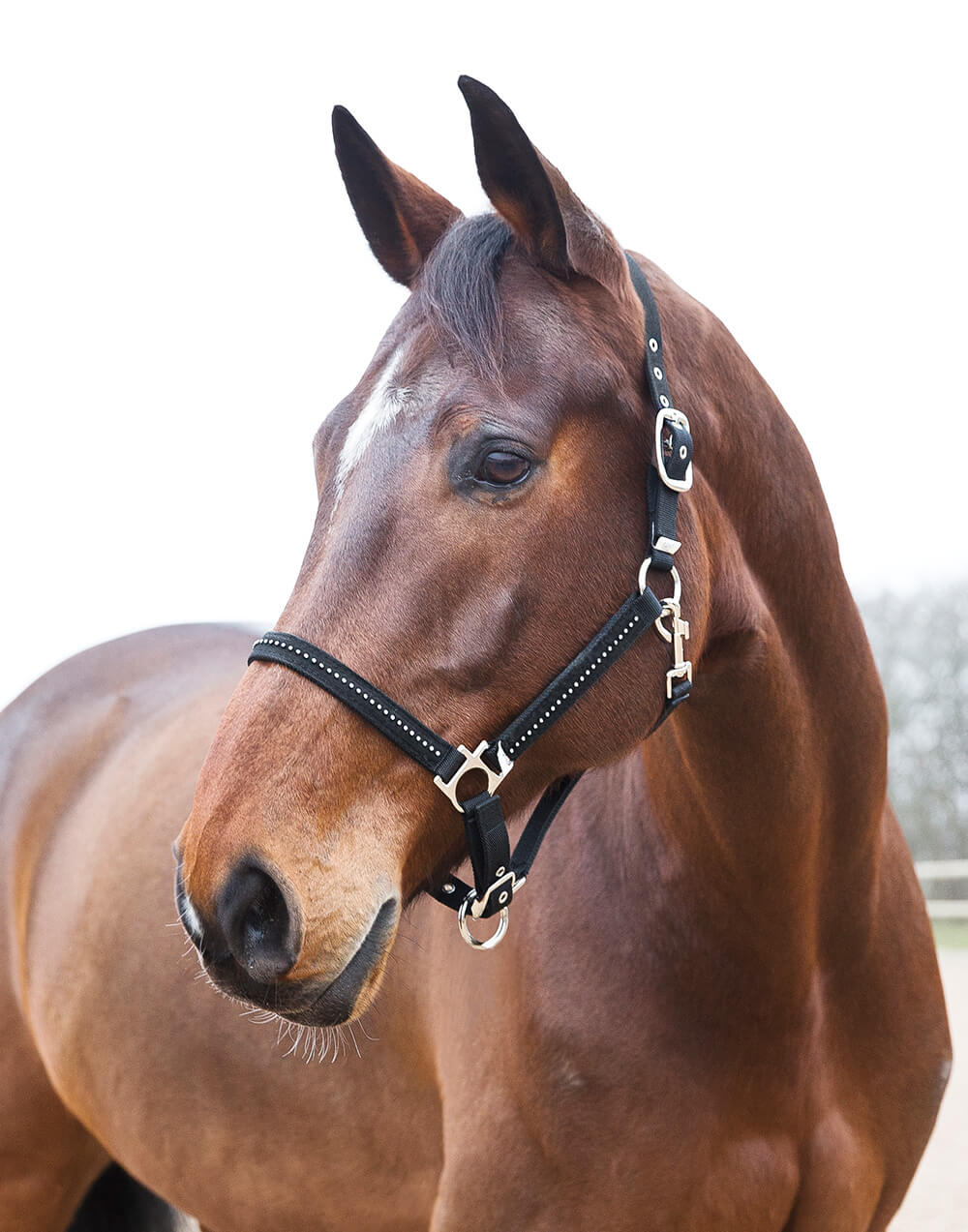 Strong nylon halter with crystals and metal buckles. Adjustable at the headpiece and noseband
