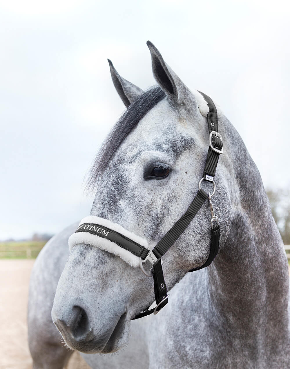 Durable classy nylon halter with faux fur padding on poll and nose, embroidery, metal fittings and adjustable at the noseband and headpiece